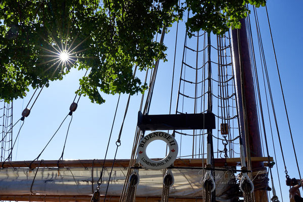 Tall ship - Bluenose II - print 8 x 10 - 8 x 10 prints by Nicole Couture-Lord - Martello Alley
