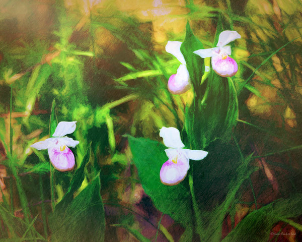 Lady Slippers (bronze finish) - 8x10 inches print