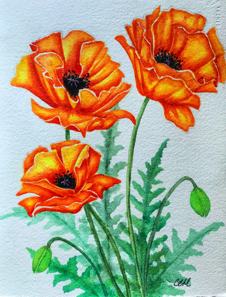Poppies 11 - 11 x 14 print by Cathie Hamilton - Martello Alley