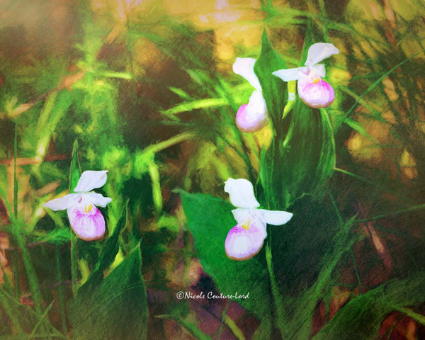 Lady Slippers - canvas 20 x 16 inches (bronze)