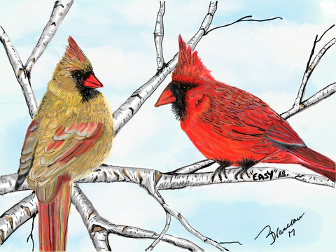 Cardinals - Easy - 8 x 10 prints by Annette Bruneau - Martello Alley