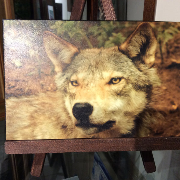 Wolf - rough canvas on hand stained easel -  by Karen Leggo - Martello Alley