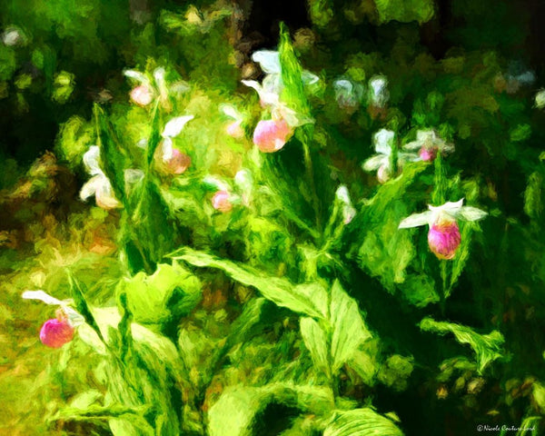 Lady's Slippers - 20 x 16 inches - 20 x 16 inches canvas prints by Nicole Couture-Lord - Martello Alley