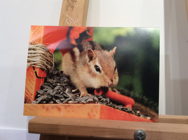 Chippy - Greeting card by Karen Leggo - Martello Alley