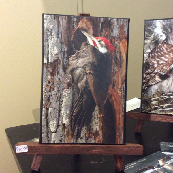 Woodpecker on easel - 5x7 canvas photo on easel by Karen Leggo - Martello Alley