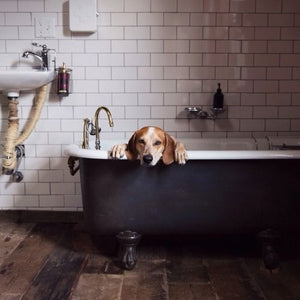 Dog Owner Guides | Post Dog Walk Relaxation