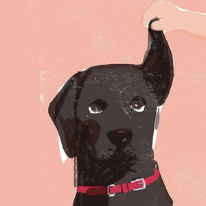Dog Owners Guide | Dog Ear Care