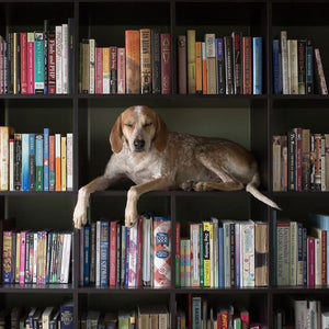 Kindred Tales | Book Guide for Dog Lovers