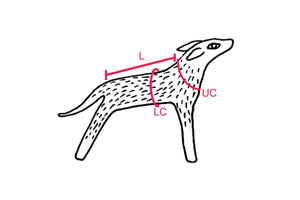 Illustration of dog with measuring information