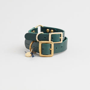 kintails leather dog collar green group image