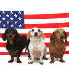 Ten 4th of July pet Safety Tips!