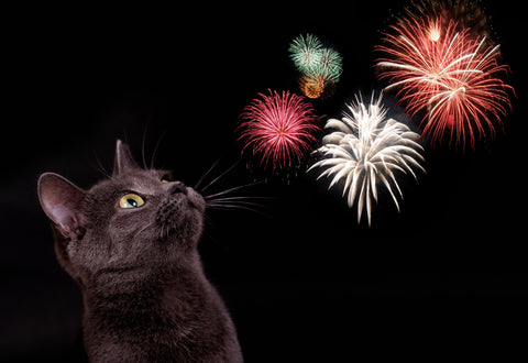 How to Prepare Your Cat for the 4th of July and Keep Him Safe