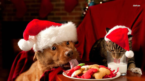 Be Prepared For The HOLIDAYS Package for CATS & DOGS
