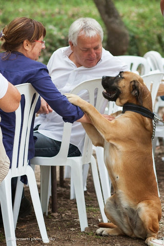 Train Your DOG To Politely GREET GUESTS