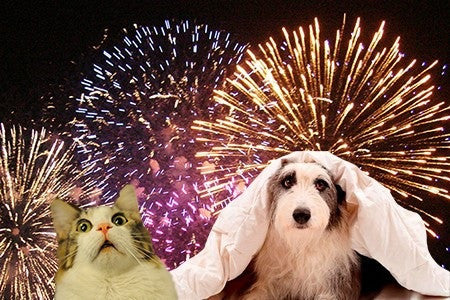 SPECIAL! 50% OFF: How to Prepare Your Pets for the 4th of July and Keep Them Safe