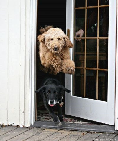 How To TRAIN Your DOG From BOLTING Out Of The Door!