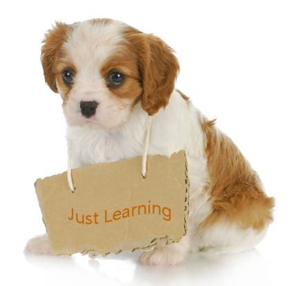 Foundational TRAINING For Your PUPPY
