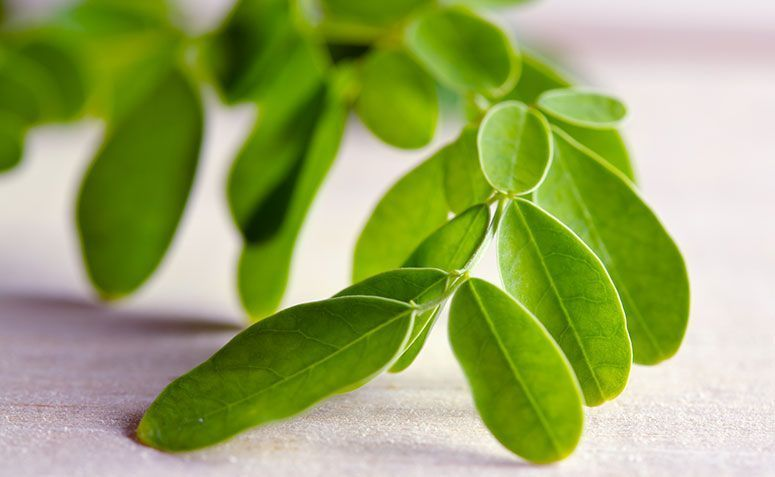 Moringa natural healing effect