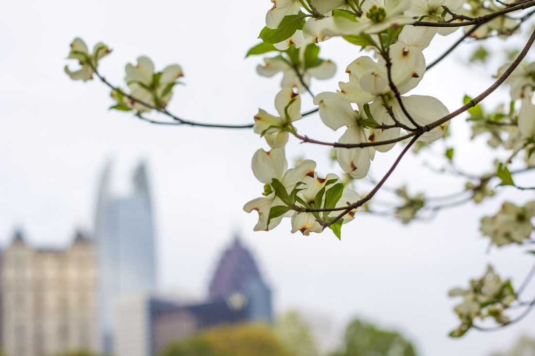 Rheos Floating Sunglasses - Dogwoods Bloom in Atlanta