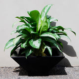 Root and Stock Sausalito Square Bowl Grey Planter Lifestyle