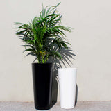 Root and Stock Sonoma Tall Round Cylinder White Planter Lifestyle