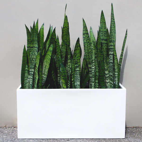 Belmont Rectangle Planter Box - Grey – Root and Stock