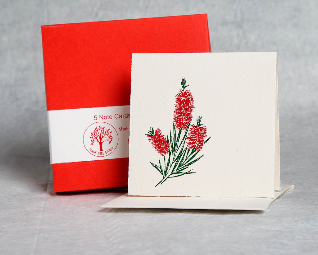 Callistemon - Boxed Set