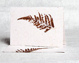 Fern - Boxed Set
