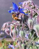 Wildflower honey bees in action, Parawera