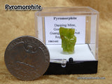 Pyromorphite Gemmy Barrel Prisms in Box