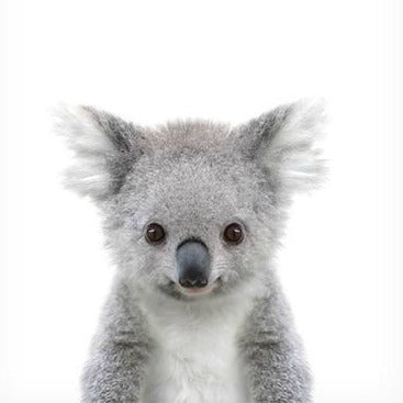 Save our Koalas