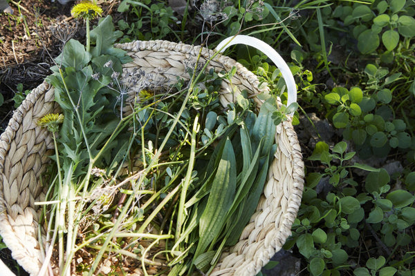 Five backyard weeds that you can eat this weekend