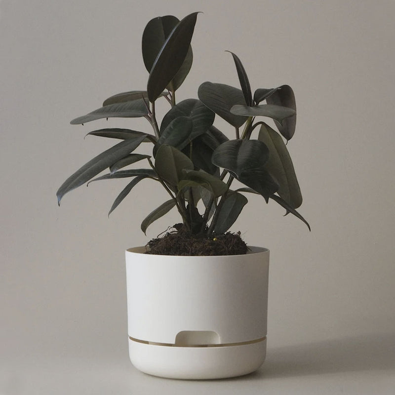 Self Watering Planter - 170mm