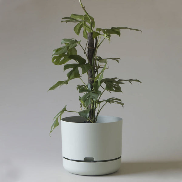 Self Watering Planter - 300mm