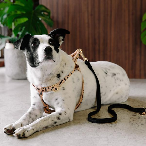 Tiggy Dog Harness