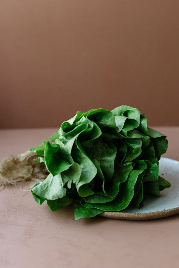 Garden Greens - Lettuce - White Boston