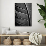 Black feather | Alu Art