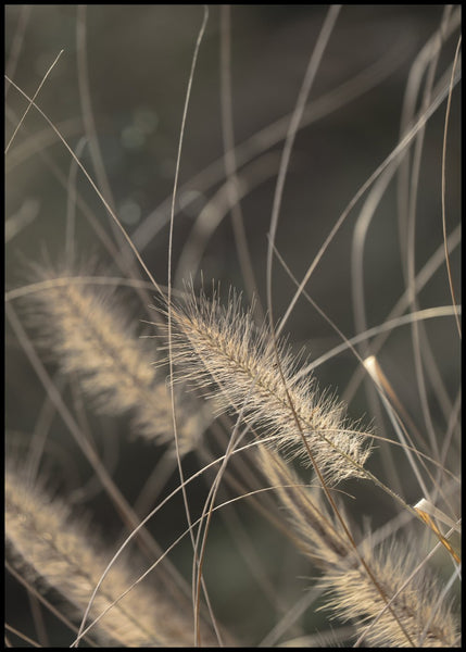 Mellow Grasses 2 | POSTER BOARD