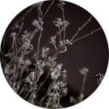 Mellow Grasses 6 | CIRCLE ART | RUNDE BILLEDER
