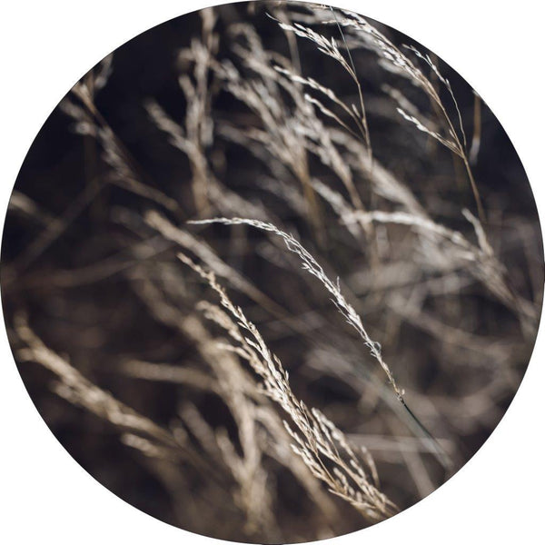 Mellow Grasses 7 | CIRCLE ART | RUNDE BILLEDER