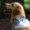 Hounds Tooth Dog Bowtie- navy