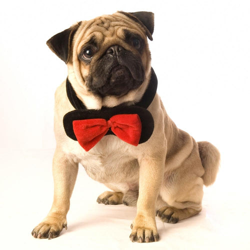 Velvet dog bowtie- black/red