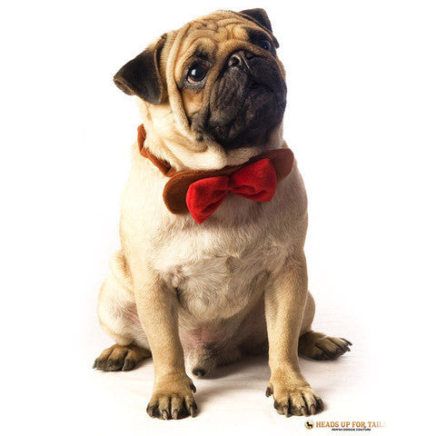Velvet dog bowtie- brown/red