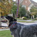 Taking my human for a walk collar and leash combo