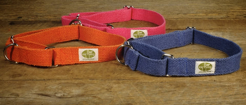 orange, blue and pink dog collars