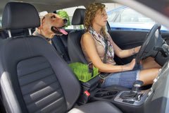 Auto Grass Car Console Pet Protector
