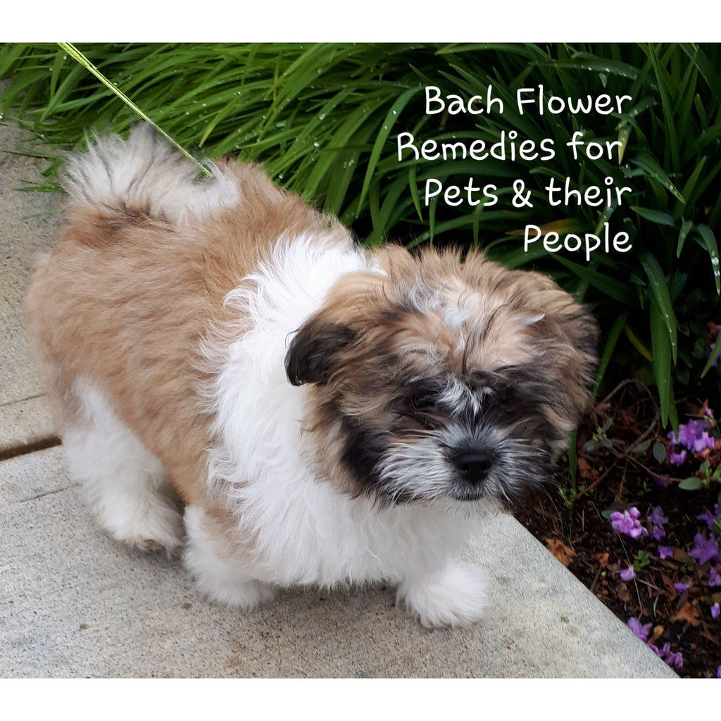 Level One Introductory Bach Flower Course for Pets and their People - Comox, BC ~ Spring 2020