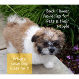 Private Level One Introductory Bach Flower Course for Pets and their People for two - Comox, BC