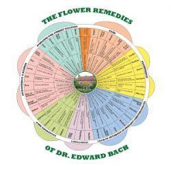 Bach Flower Remedy Wheel