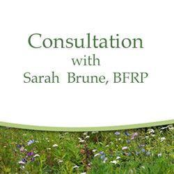 Choosing Remedies Consultation with Sarah Brune, BFRP ( Half Hour )